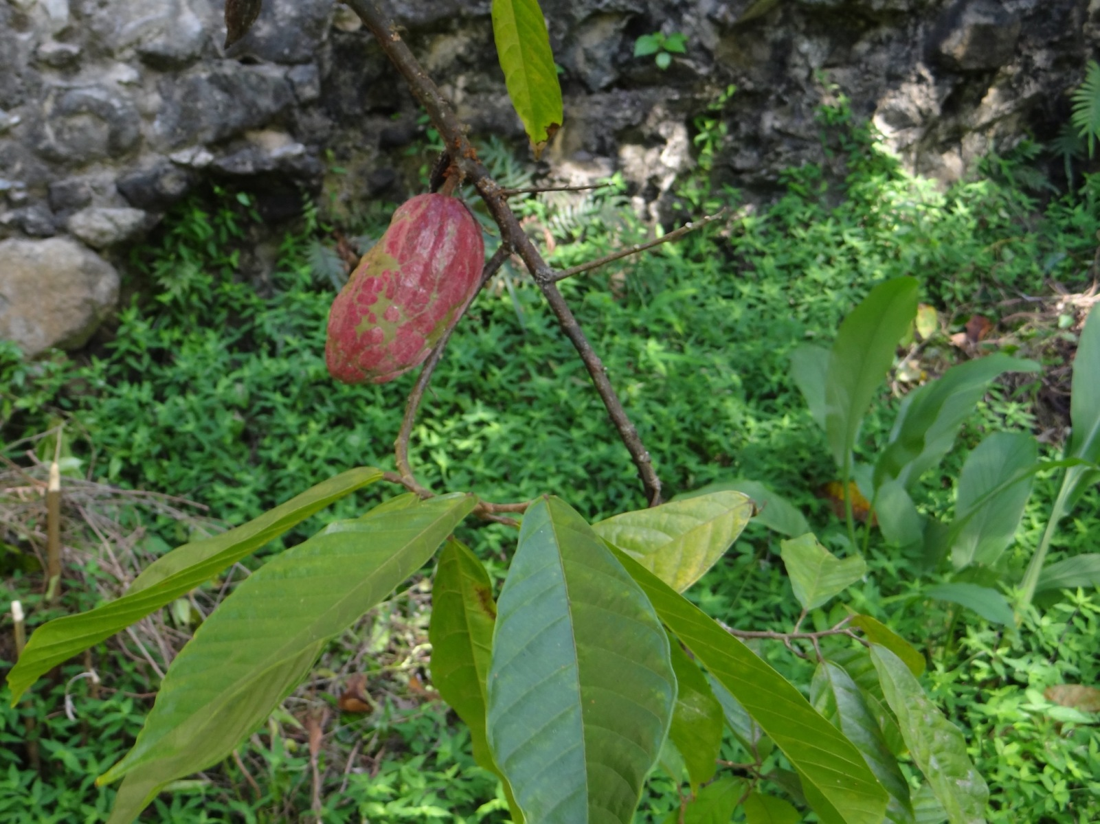 20200112_Karibik_52